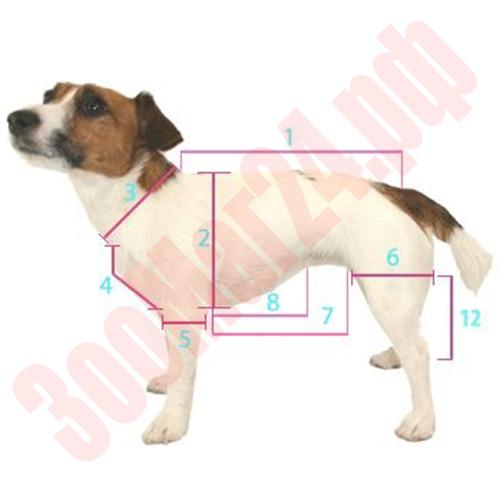 Как снять мерки с собаки для одежды