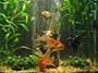 Фильтрация в аквариуме.