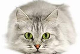 Книги про кошек